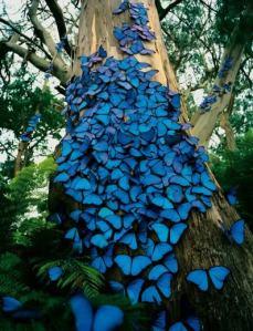 Butterflies on tree